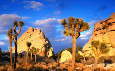 Escape Winter – Camping in the Southern U.S.