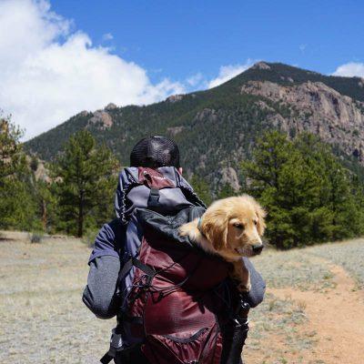 Dog In Backpack